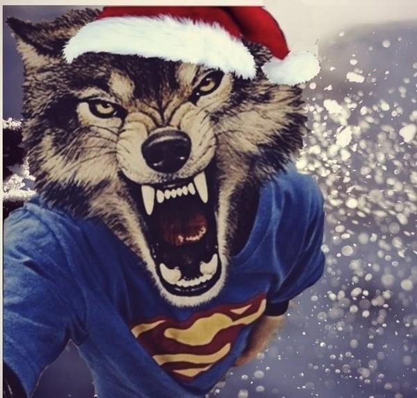бесплатно картинки человек с головой волка на аву относятся